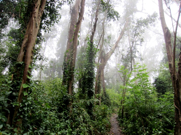 sutro-forest-path